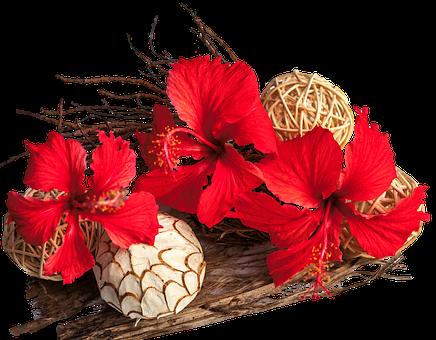 Hledáte potřeby pro floristy a aranžéry květin?