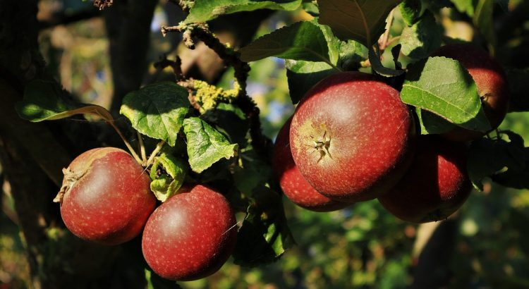 Apples Fruits Food Fresh Healthy  - rschaubhut / Pixabay