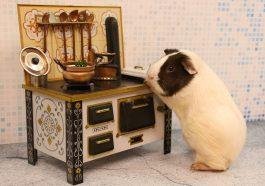 Kitchen Budget Cook Oven Stove  - furbymama / Pixabay
