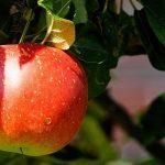 Přístroje na zpracování ovoce – lisy, drtiče, moštovače