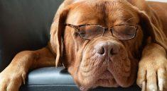 Druhy vodítek pro psy – znáte je všechny?