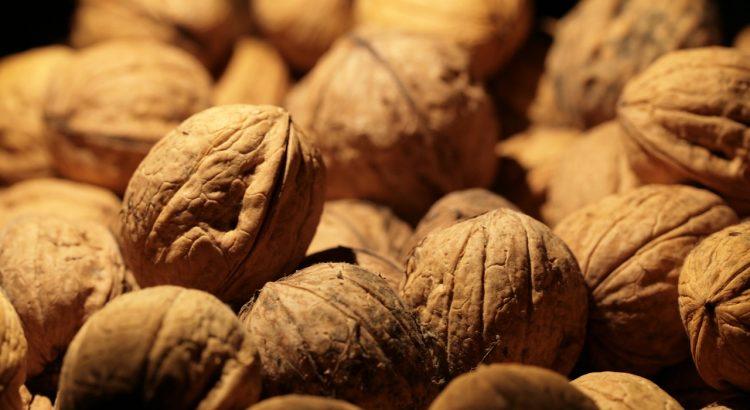 Walnuts Thanksgiving Autumn Serious  - Joa70 / Pixabay